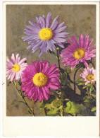 BIGLIETTO AUGURI - FIORI - 1951 - Flowers