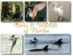 (106) FLorida Birds And Dolphin - Oiseaux