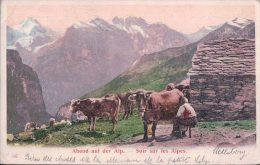 La Traite Du Soir Sur Les Alpes, Cachet Linéaire UETLIBERG (2.9.1903) Usure Des Angles - Elevage
