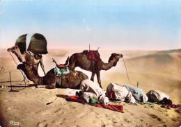 Algérie (Scènes Et Types Collection Artistique L´Afrique ) La Prière Au Désert (Cpsm-CIM Cliché R.PROUHO 1048)*PRIX FIXE - Scènes & Types