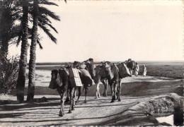 Algérie (Collection  Saharienne Scènes Et Types ) Le Ravitaillement Aborde L'Oasis (Cpsm- LA CIGOGNE 8)* PRIX FIXE - Scènes & Types