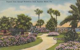 Florida Daytona Beach Tropical Trail Through Waterfront Park