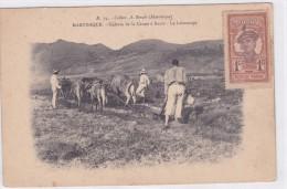 Martinique - Culture De La Canne à Sucre - Le Labourage - Martinique