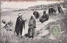 PALESTINE / FELD DES BOAS CHAMP DE BOOZ  /   REF  MARS 16 / N° 277 - Palestine