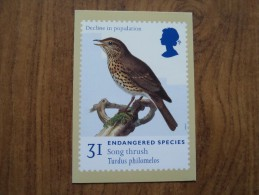 51065 POSTCARDS: STAMPS (PICTURES):  31p ENDANGERED SPECIES Song Thrush / Turdus Philomelos. - Stamps (pictures)