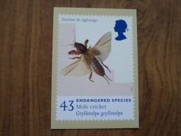 51070 POSTCARDS: STAMPS (PICTURES):  43p ENDANGERED SPECIES: Mole Cricket. - Stamps (pictures)
