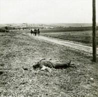 France WWI Revigny Champ De Bataille Cadavre Ancienne Photo SIP 1914-1918 - War, Military