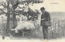 Trufficulture - En Périgord - Groupe Sympathique Cherchant La Truffe - Edition M.T.I.L. - Carte N°111 Non Circulée - Cultures