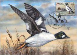 _TH Belarus 2016 Fauna Bird Of The Year Goldeneye Duck MaxiCard MC - Canards