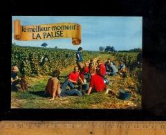 Les Vendanges : La Pause Vigne Vignes Vignoble Beaujolais Maconnais Bourgogne Ceps Vendangeurs Vendangeur Raisin - Farmers