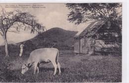 Martinique - Paysage De Saint-Luce - Martinique