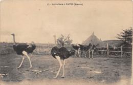 SOUDAN - Autrucherie à KAYES - Autruche - Soudan