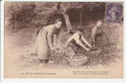 Notre Normandie - Cueillette Des Pommes - Basse-Normandie