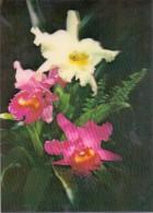 3D - Orchids - Toppan - Ansichtskarten