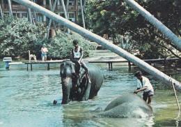ELEPHANT BATHING SRI LANKA (dil176) - Sri Lanka (Ceylon)