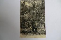 CPA 03 FORET DE TRONçAIS. Forêt De Tronçais. Montaloyer Le Gros Chêne. 1909. - France