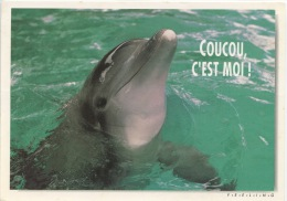 Coucou C'est Moi ! (coll Mots De Passe) Dauphin - Dauphins