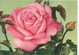 Jolies Roses De France : Grace De Monaco (Meillland) N°6 éd Yvon - Rose Rosier - Flowers