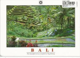 INDONESIE. Les Magnifiques Terrasses De Rizières à Tegallalang BALI, Carte Postale Neuve Non Circuée - Cultures