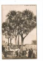 AFD.0209/ Sudan - Dum Palmtree - Sudan