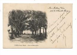 COB.0019/ Congo Belge - Zambi - Allée Du Débarcadère - Belgian Congo - Other