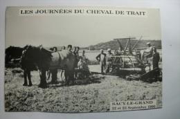 D 60 - Sacy Le Grand - Les Journées Du Cheval De Trait - ( CARTE MASSICOTE ) - Francia