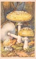 ¤¤  -   CHAMPIGNON   -  Amanite Panthère   - ¤¤ - Champignons