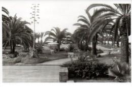 Marokko - Mohamedia In Casablanca - 4. August 1963 Private Foto 1 - Ansichtskarten