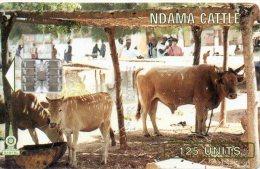 Vache Cow Télécarte Phonecard  Telefonkarten R134 - Gambie