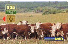 Vache Cow Télécarte Phonecard  Telefonkarten R140 - Uruguay