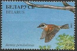 Belarus -MNH - Family PENDULINE TITS : Eurasian Penduline Tit ( Remiz Pendulinus ) - Zangvogels