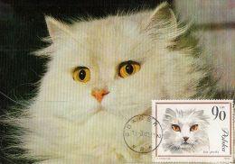 DOMESTIC CATS, WHITE PERSIAN, CM, MAXICARD, CARTES MAXIMUM, 1980, POLAND - Hauskatzen
