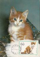 DOMESTIC CATS, KITTENS, CM, MAXICARD, CARTES MAXIMUM, 1980, POLAND - Hauskatzen