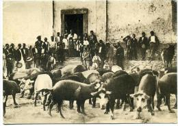 2A ? - 2B ? ++ Corse 1900 - Scènes Et Types - La Bénédiction Des Cochons - Sonstige Gemeinden
