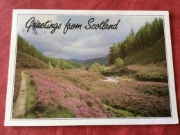 UK Greetings From Scotland - Scotland