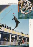 JAPAN - Enoshima Marineland - Dolphins - Japón