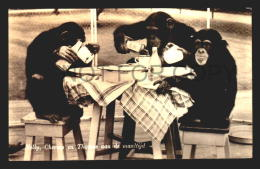 CHIMPANZEE MONKEY ROTTERDAM ZOO NELLY CHEEMO EN THOMAS  Vintage Original Ca1930 POSTCARD CPA AK (W4_2180) - Apen