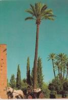 MARRALECH : Promenade En Fiacre. Flamme - Marrakesh