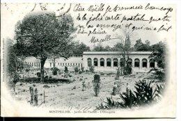MONTPELLIER 534) - Jardin Des Plantes Et L'Orangerie - Montpellier