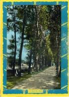 Le Bizet. La Drève. - Comines-Warneton - Komen-Waasten