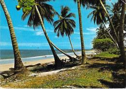 AFRIQUE NOIRE - GABON - Plage Près De LIBREVILLE ( Cocotiers Coconut Palm De Coco )  CPSM GF - Black Africa ( - Gabon