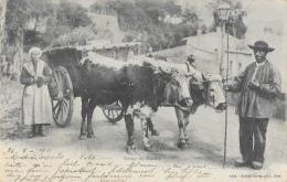 Retour Du Marché - Un Attelage De Boeufs - Edition Giletta - Carte Précurseur N°8202 - Wagengespanne