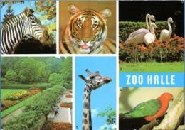 Halle A.d. Saale - Zoo 1 - Halle (Saale)