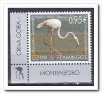 Montenegro 2015, Postfris MNH, Birds, Flamingos - Montenegro