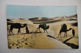 CPA ALGERIE. Sud Algérien Bassour Dans Les Dunes. 1958.
