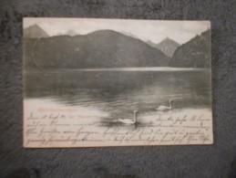 Cpa Hohenschwangau  Der Der Alpsee 1902. - Fuessen