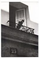 CPSM CHAT A LA FENETRE DU NUMERO 25  GOLBIN PARIS 1982 NOUVELLES IMAGES - Chats