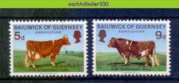Mex033 FAUNA ZOOGDIEREN BOERDERIJDIEREN KOEIEN STIER COWS BULL MAMMALS FARM ANIMALS GUERNSEY 1970 PF/MNH # - Koeien