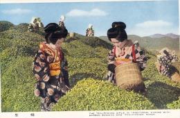 Z1z - JAPAN - Japan Tea Picking Kimono -unused - Japan