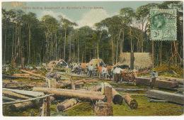 British Guiana Guyana Cattle Kanting Greenheart On Sproston's Timber Grants P. Used  Edit Kaps Jeweller - Cartes Postales